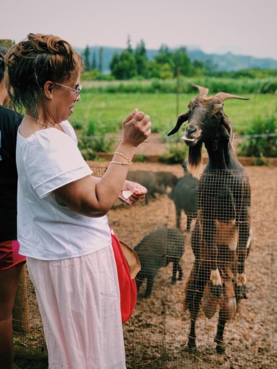 Mom feeding the goat